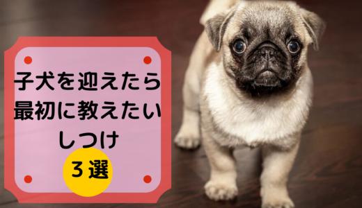 子犬を迎えたら最初に教えたいしつけ3選