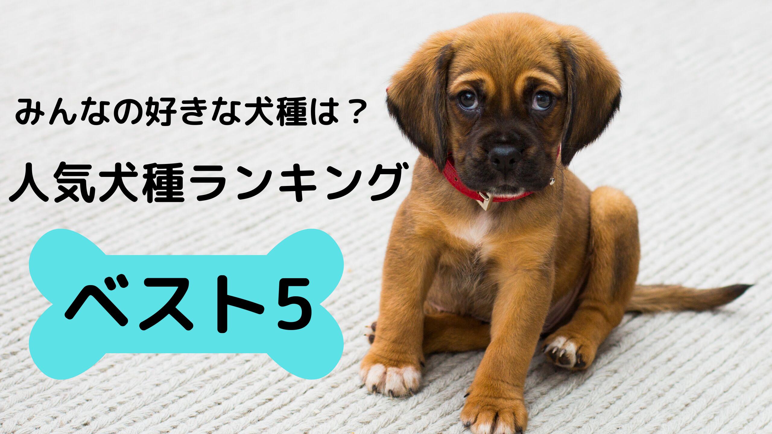 みんなの好きな犬種は?人気犬種ランキングベスト5