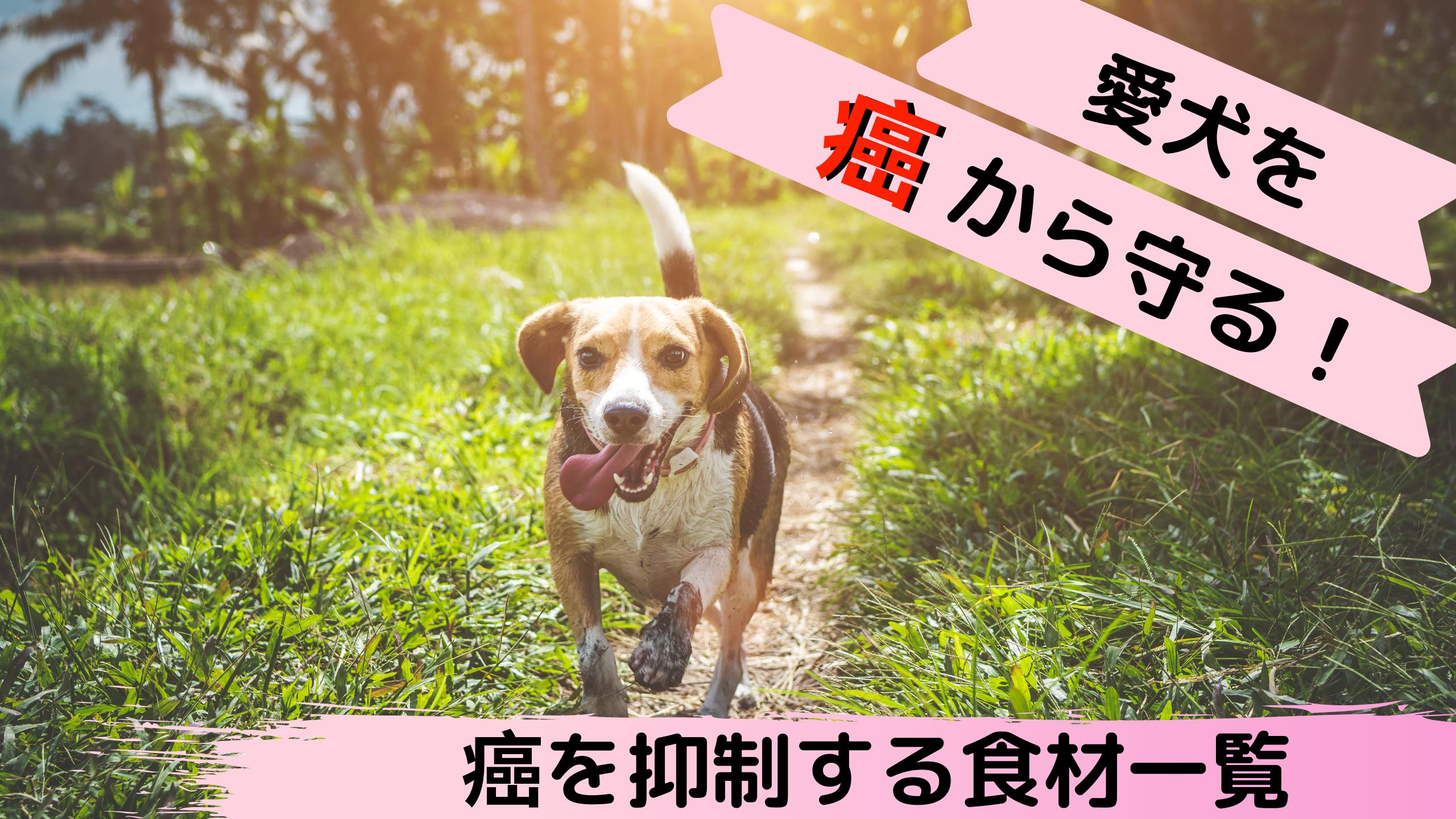 愛犬を癌から守る!癌を抑制する食材一覧