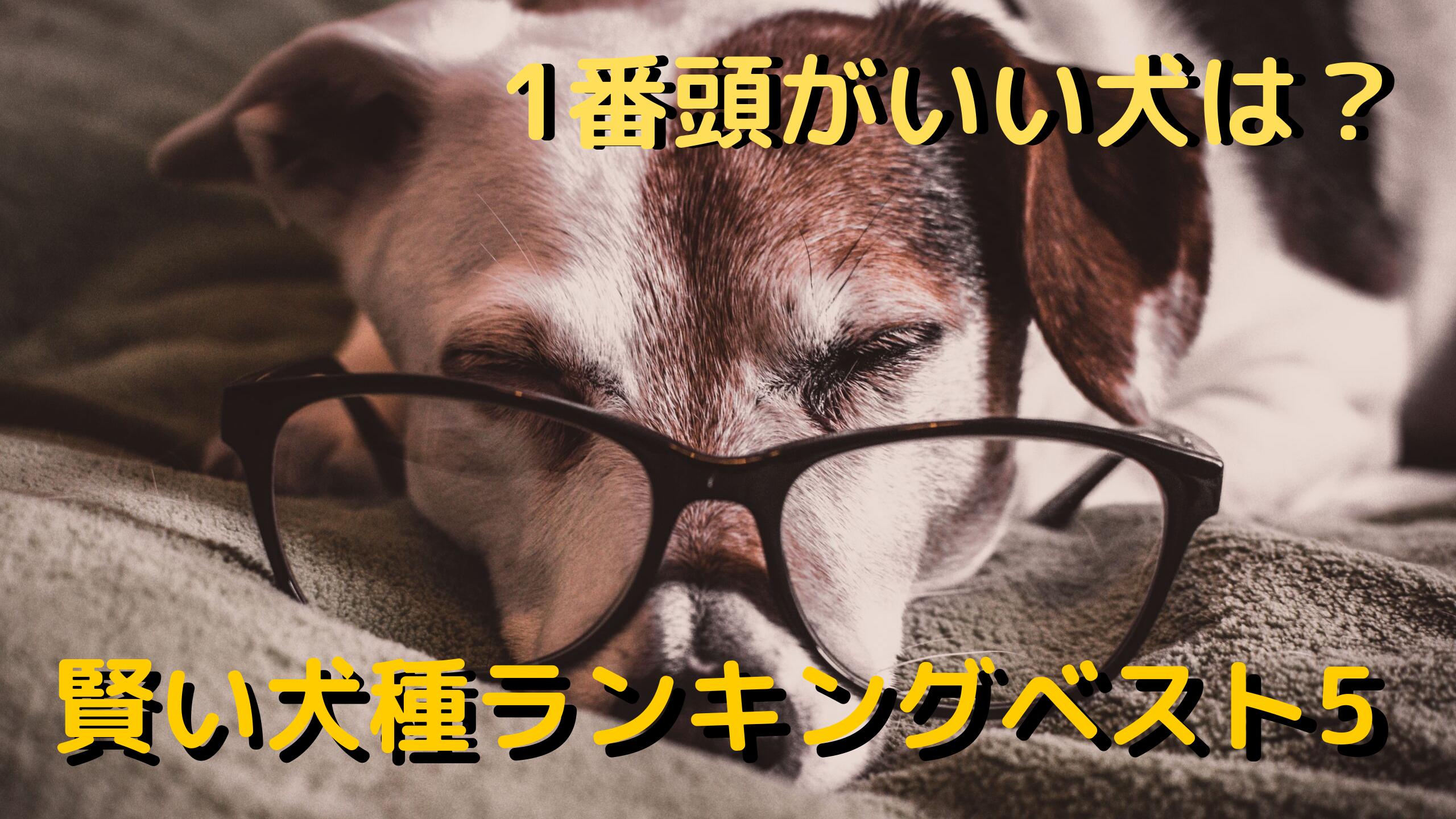 1番頭がいい犬種は何か知っていますか?賢い犬種ランキングベスト5