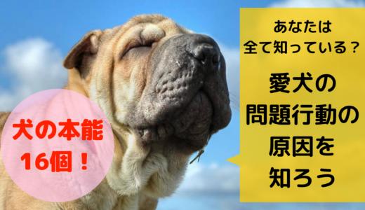 あなたは全て知っている?犬の本能16個!愛犬の問題行動の原因を知ろう