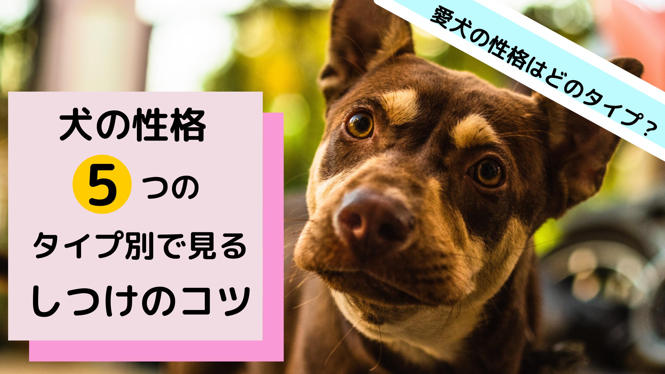 愛犬の性格はどのタイプ?犬の性格5つのタイプ別で見るしつけのコツ