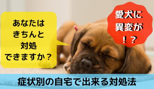 愛犬に異変が!あなたはきちんと対処できますか?症状別の自宅で出来る対処法