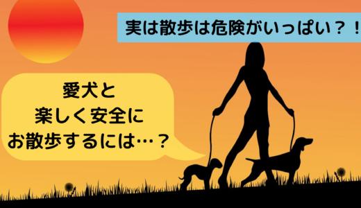 実は散歩は危険がいっぱい?!愛犬と楽しく安全にお散歩するには…?