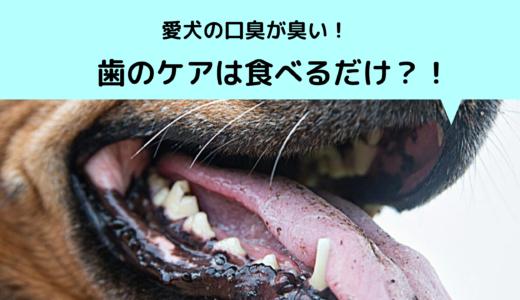 愛犬の口臭が臭い!歯のケアは食べるだけ?!