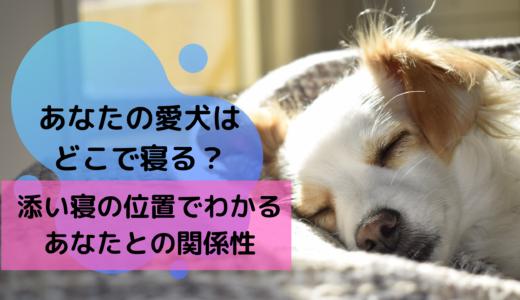 あなたの愛犬はどこで寝る?添い寝の位置でわかるあなたとの関係性