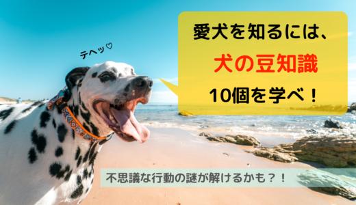 愛犬を知るには、犬の豆知識10個を学べ!