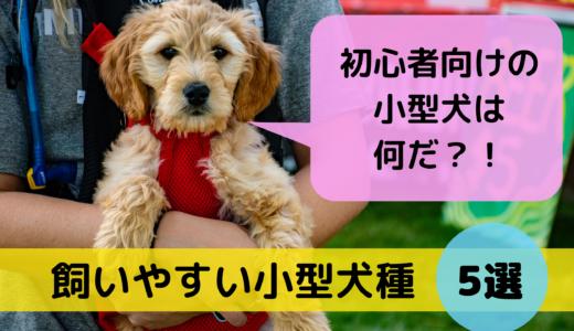 初心者向けの小型犬は何だ?!飼いやすい小型犬種5選