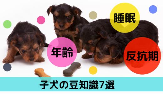 子犬の年齢・睡眠・反抗期!子犬の豆知識7選