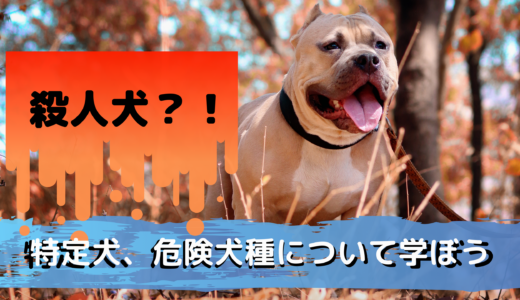 殺人犬?!特定犬、危険犬種について学ぼう