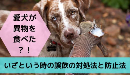 愛犬が異物を食べた?!いざという時の誤飲の対処法と防止法