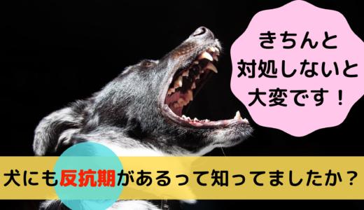 犬にも反抗期があるって知ってましたか?きちんと対処しないと大変です!