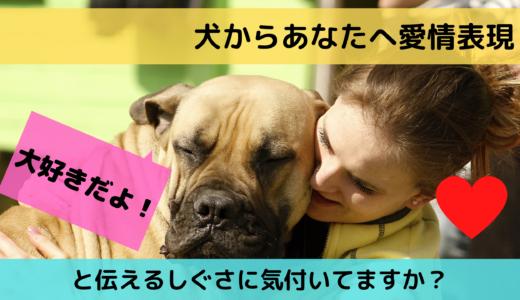 犬からあなたへ愛情表現「大好きだよ!」と伝えるしぐさに気付いてますか?